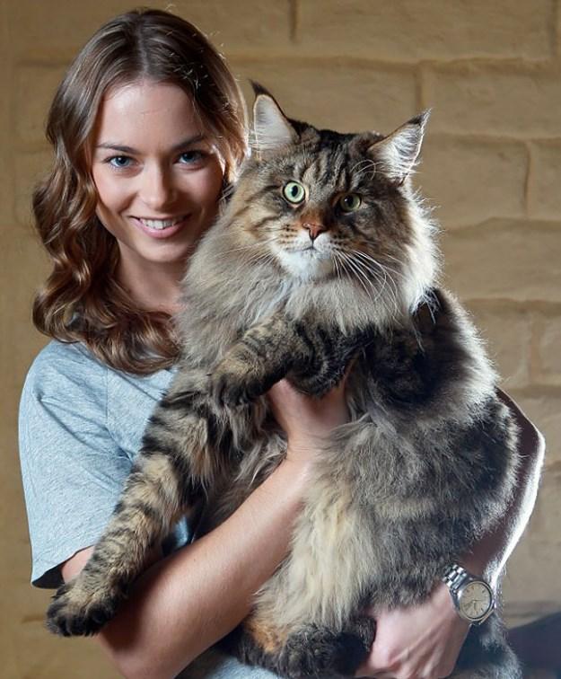 big_pet_cat_01