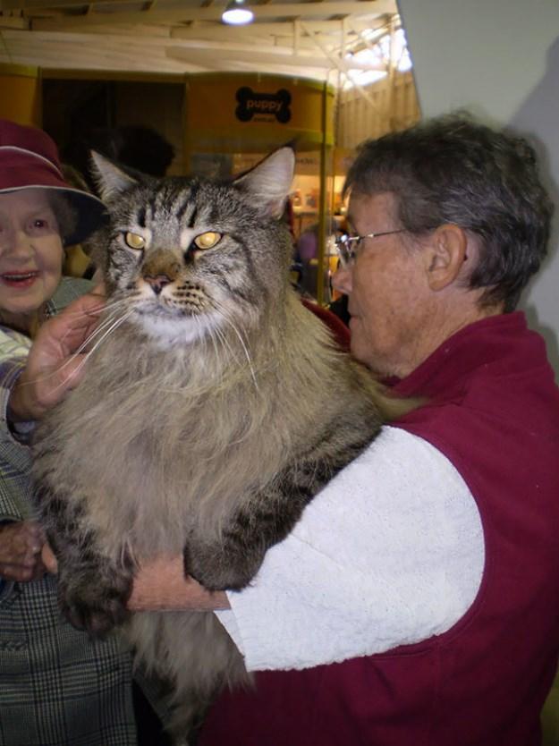 big_pet_cat_02