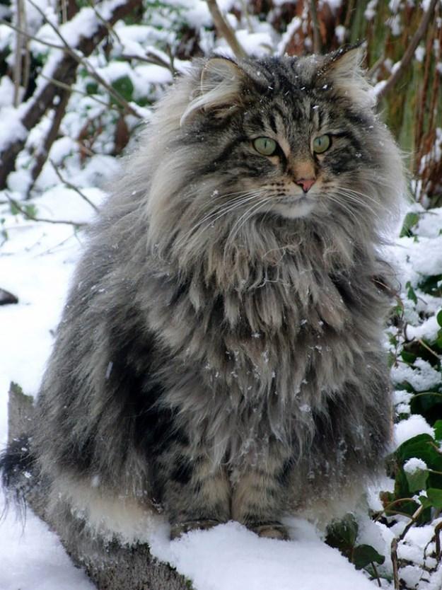 big_pet_cat_06