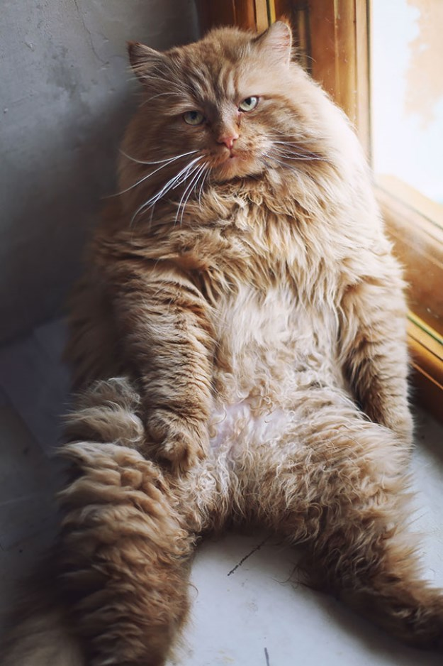 big_pet_cat_10