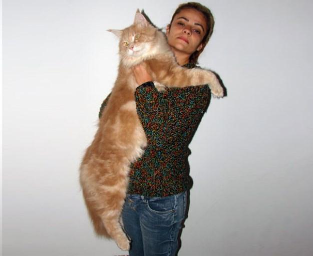 big_pet_cat_17
