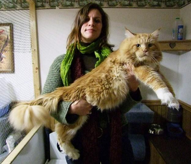 big_pet_cat_20