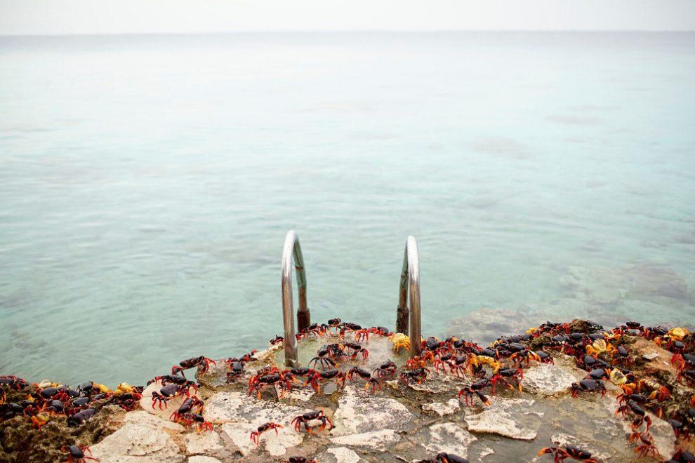 Ежегодное нашествие крабов на Кубе