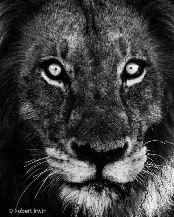 39 потрясающе красивых фотографий животных от Роберта Ирвина