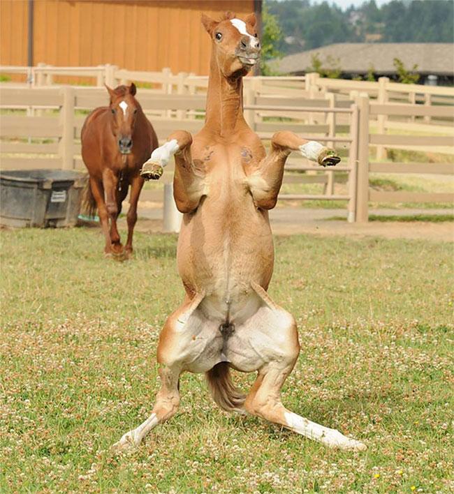 Случайные фотографии которые заставят вас смеяться