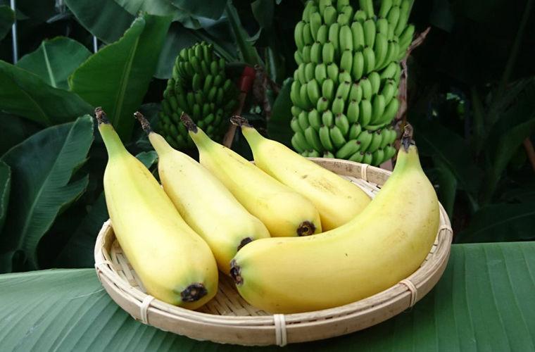 В Японии разработали банан со съедобной кожурой