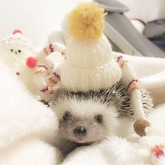 Очень смешные и забавные ёжики в шапочках