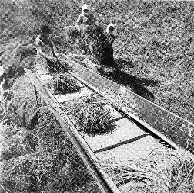 Черно-белые фотографии жизни Греции в 1950-ые годы