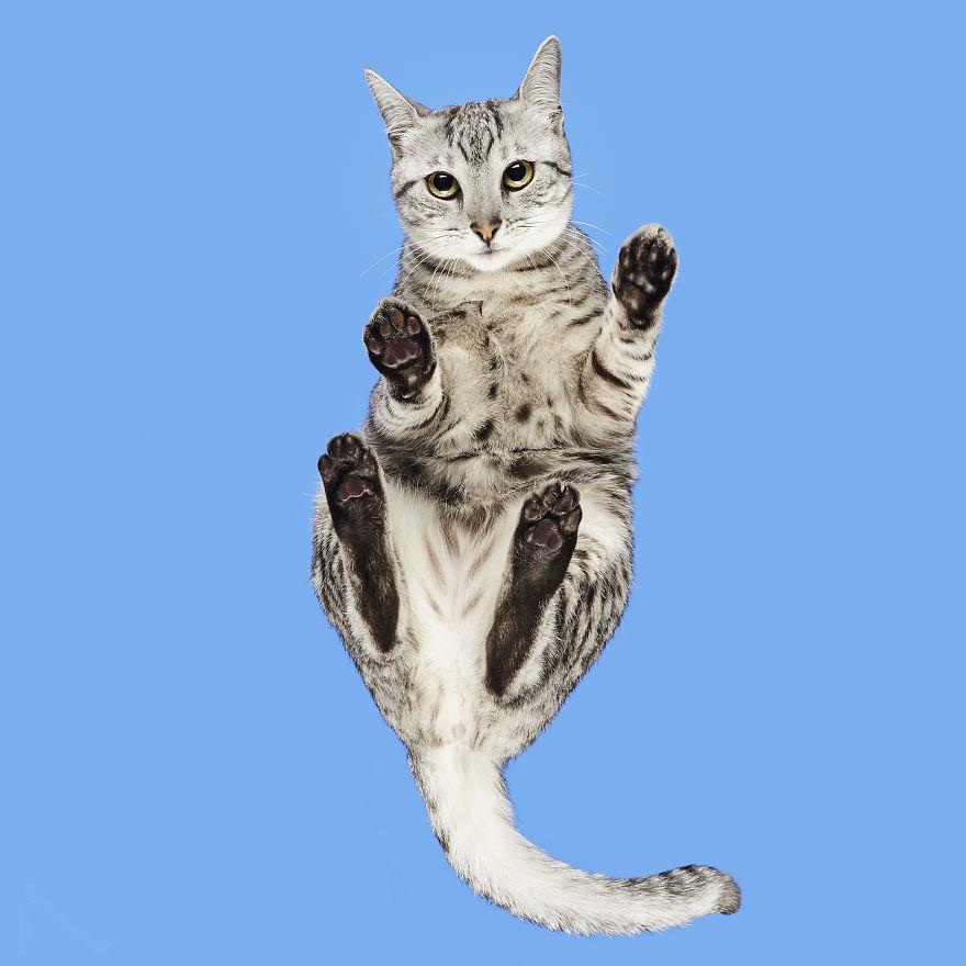 «Коты снизу»: коллекция фотографий Андрюса Бурбы