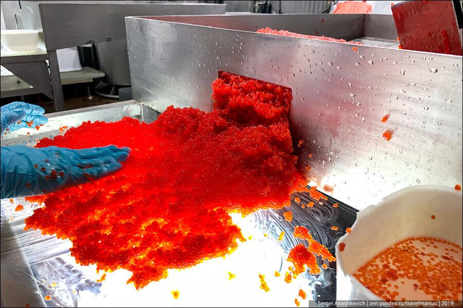 Как делают красную икру на Камчатке
