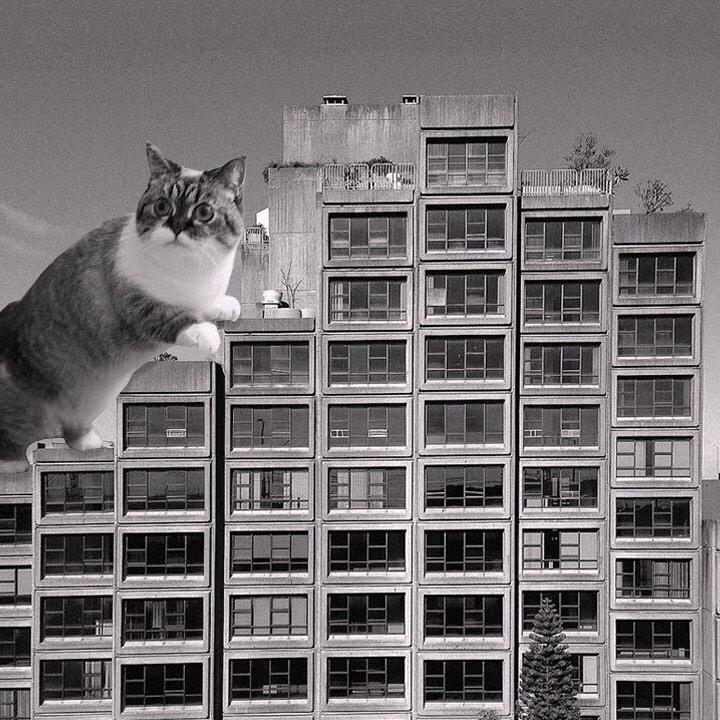 Бруталистская архитектура и гигантские кошки