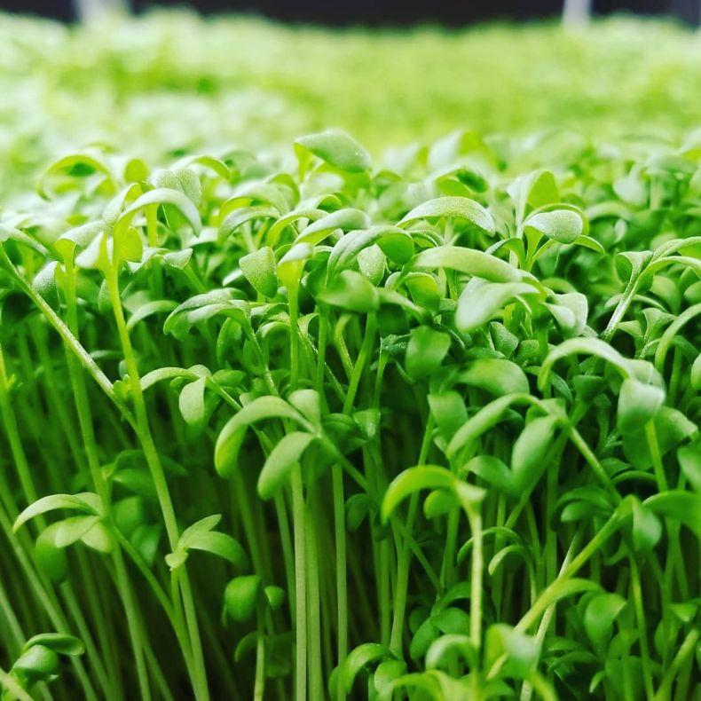 Виды растений которые помогут восстановить калории при выживании