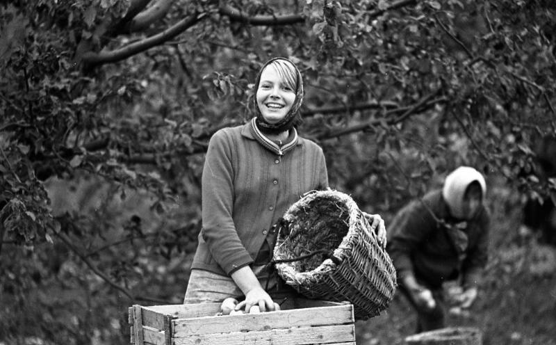 Счастливое время сбора урожая в СССР