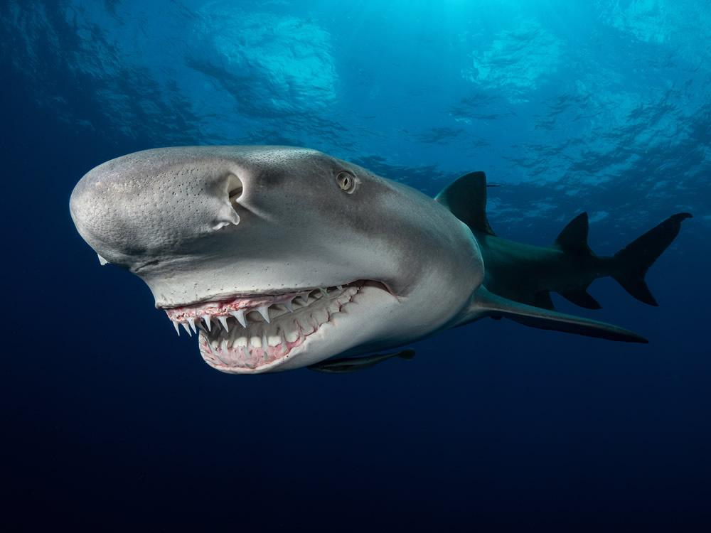 Самые впечатляющие фотографии финалистов конкурса Ocean Photography Awards 2021
