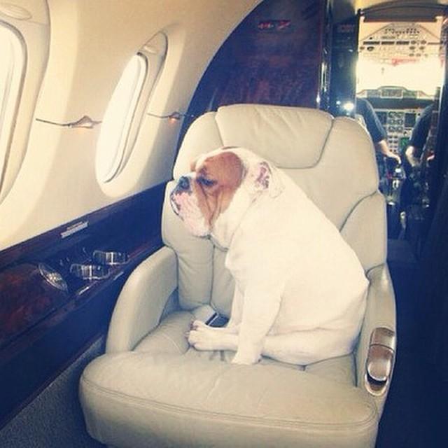 Роскошные собаки из instagram