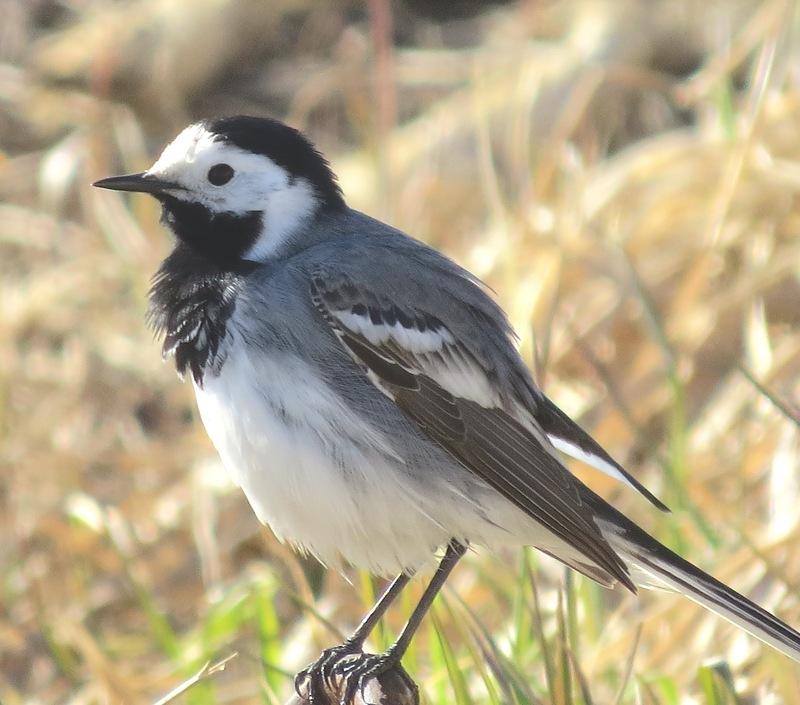 Удивительно красивые птицы