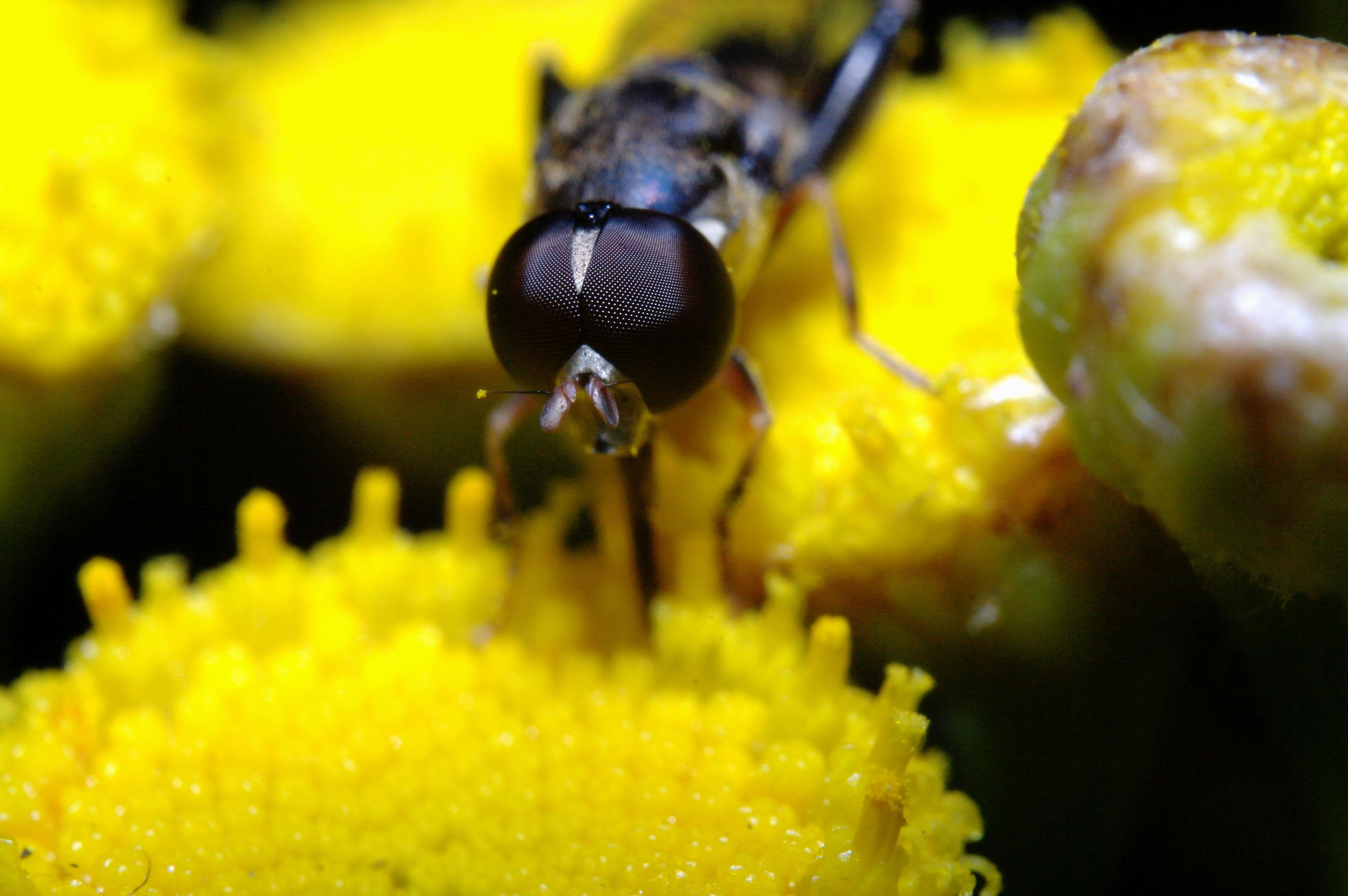 blowfly_018
