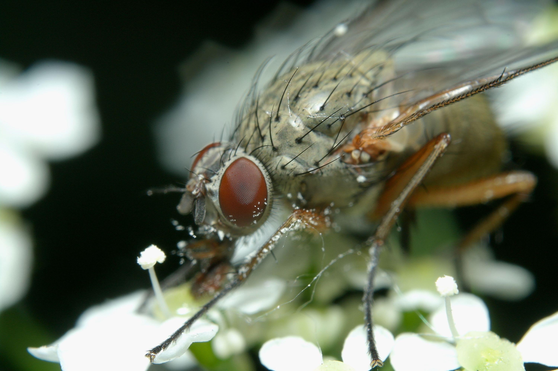 blowfly_025