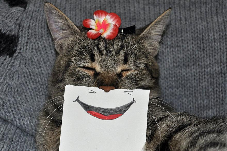 Хозяин кота рисует ему смешные выражения лица