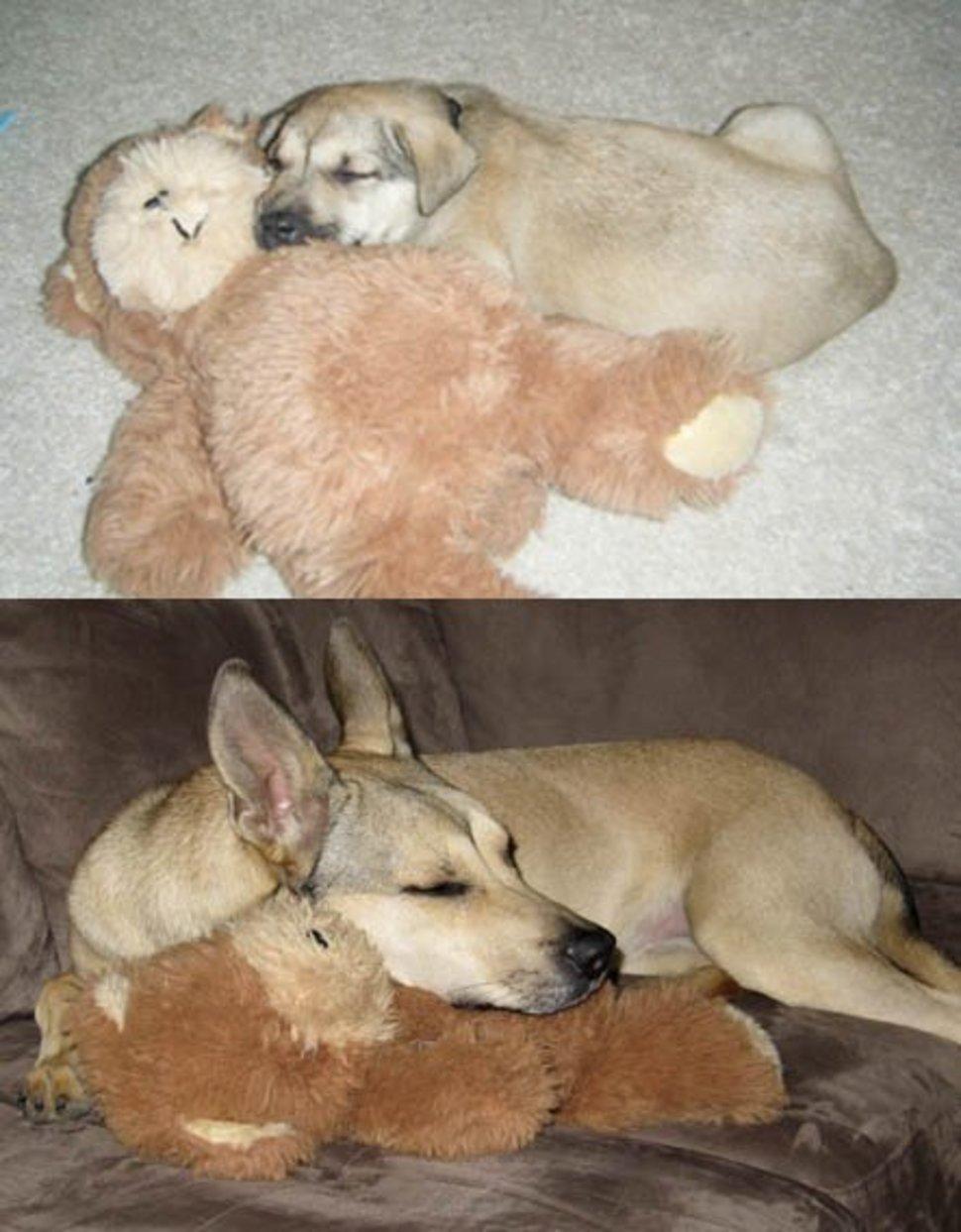 doggy_006