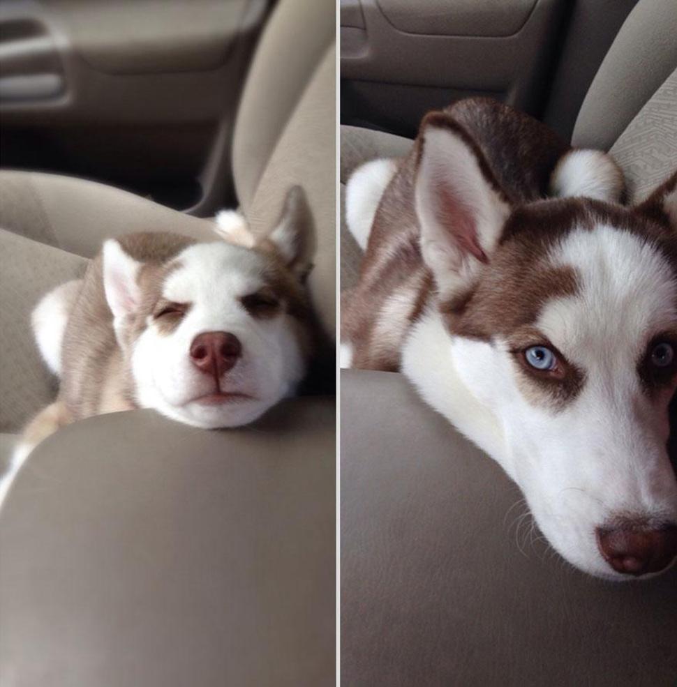 doggy_014