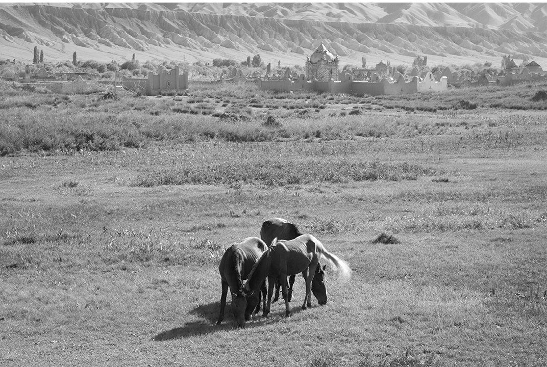 Лошади пасутся перед местом захоронения, который начал исчезать в ландшафт.