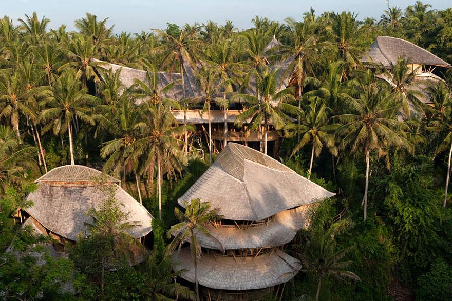 Недостатки данного растения только влага и насекомые, которые портят бамбук.
