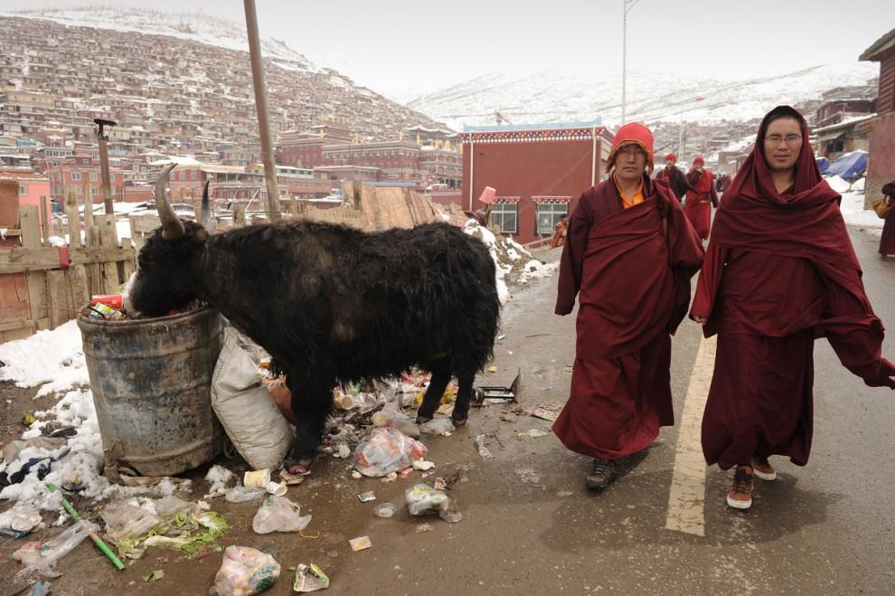 tibet_seda_9