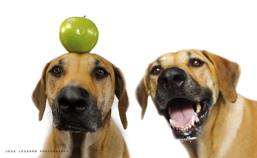 Собака Кая ворует еду