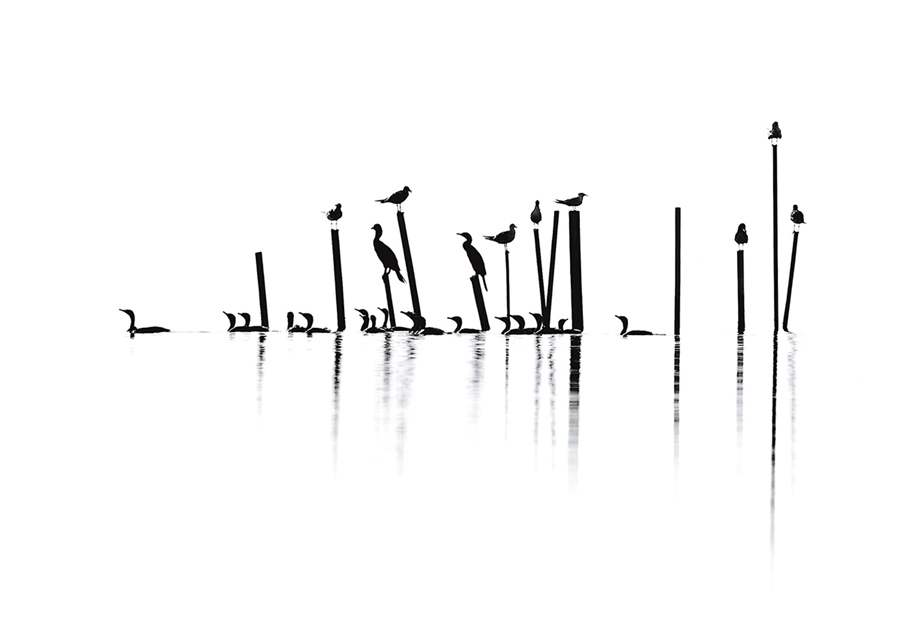 Чайки, ушастые бакланы, и крачки, фото: Констанция Миер