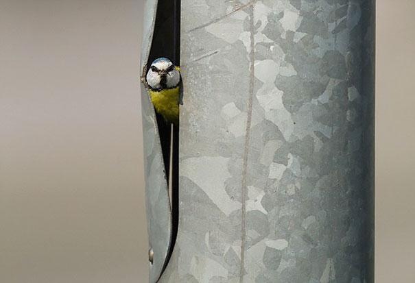 bird_15