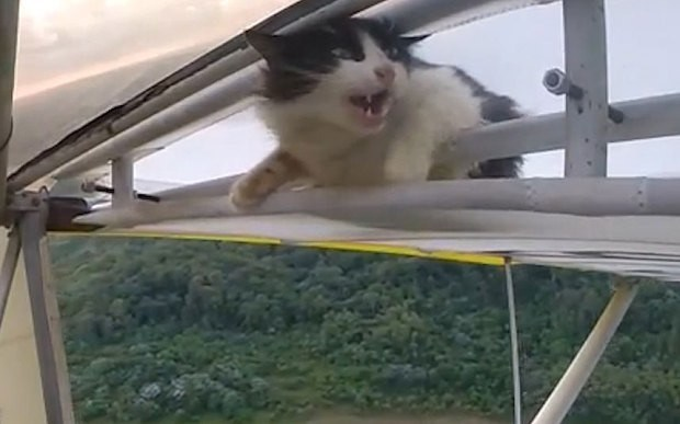 Кошка в воздухе, во время полета планера