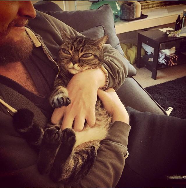 Совершенно реальная кошка-инопланетянин