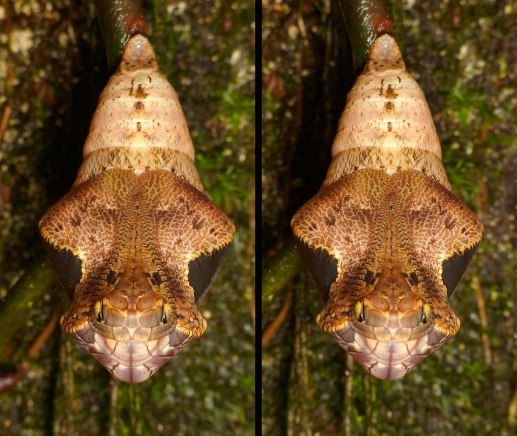 Безобидная гусеница со змеиной головой