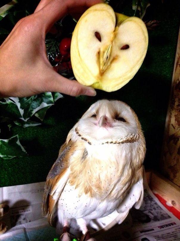 Сова из яблока