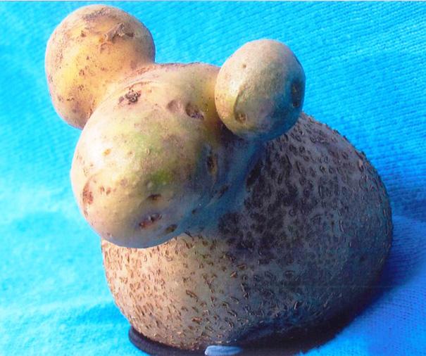 Картофель, который выглядит как овца