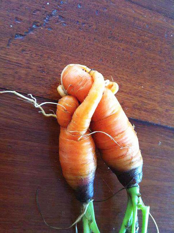 Морковь - мама и ребёнок