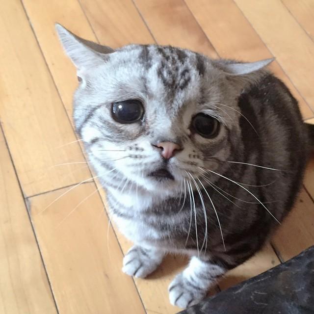 luhu_cat_1