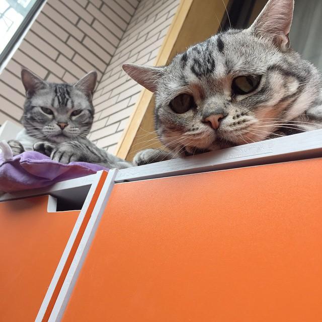 luhu_cat_11