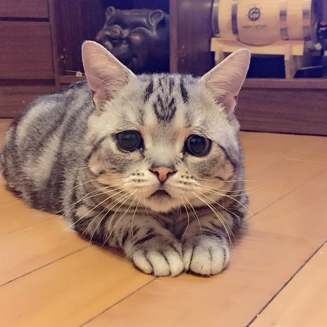 luhu_cat_13