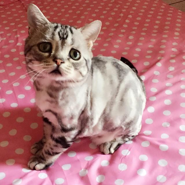 luhu_cat_14