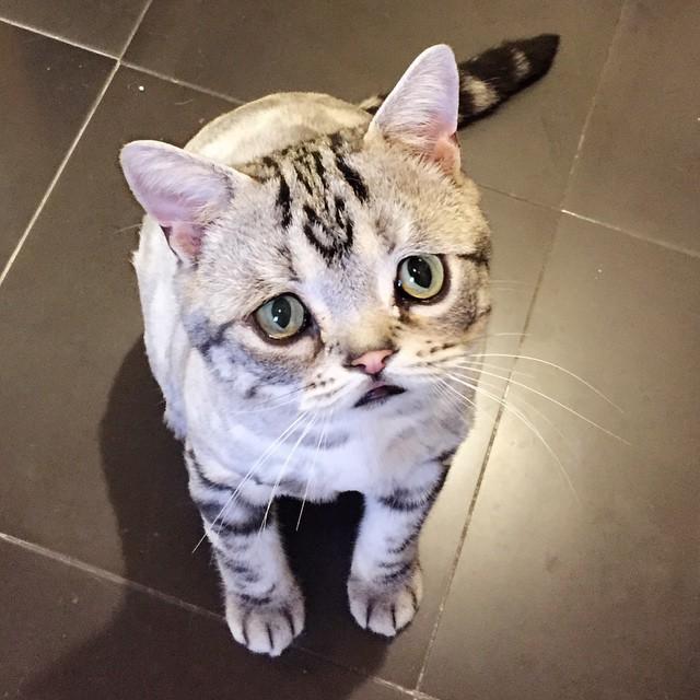 luhu_cat_2