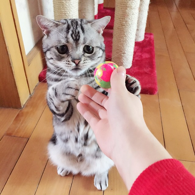 luhu_cat_3