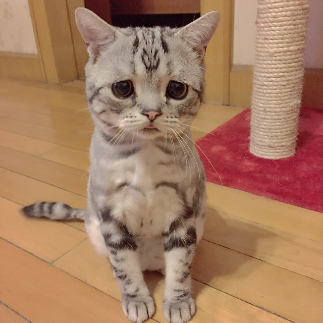 luhu_cat_5