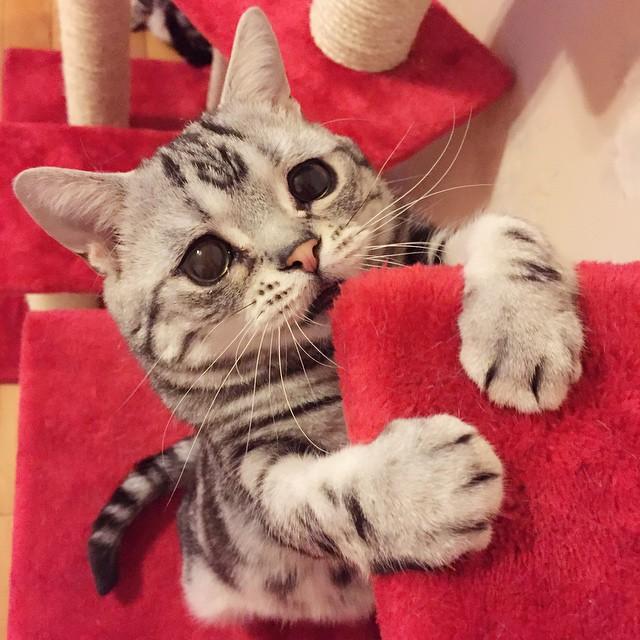 luhu_cat_7