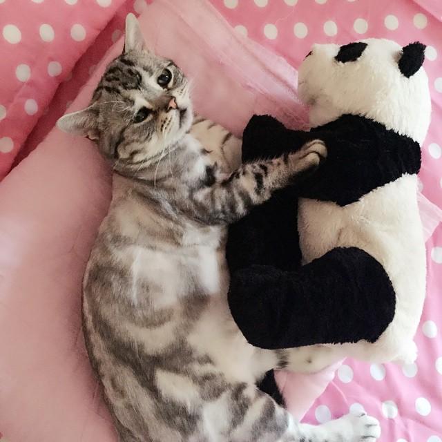 luhu_cat_8