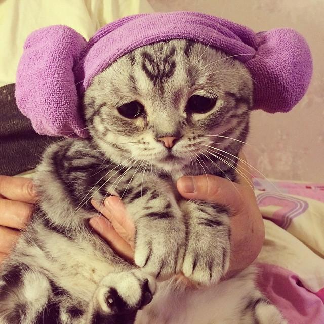 luhu_cat_9