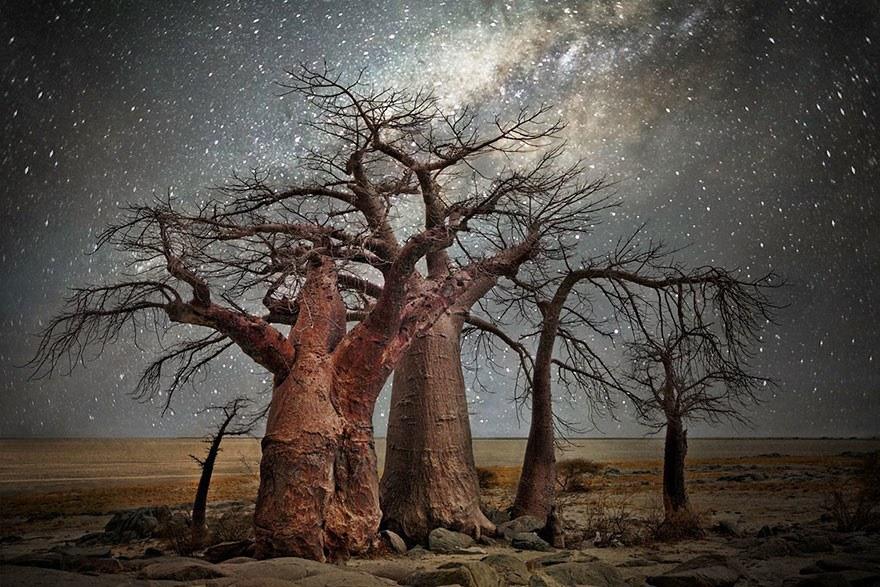 Фотографии старых деревьев на фоне звезд