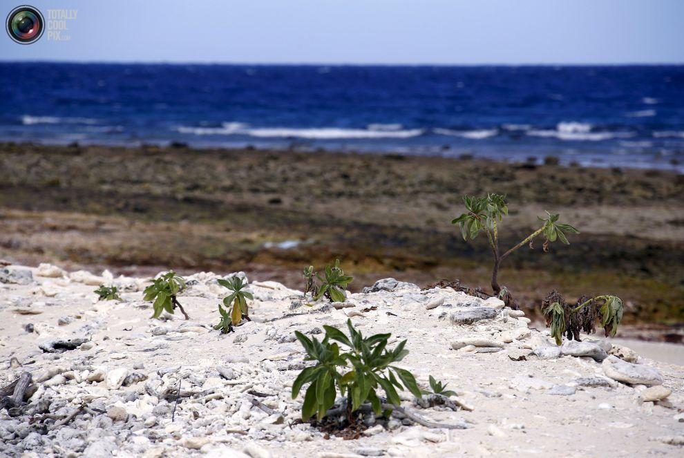 Кустики растут на коралловом пляже.