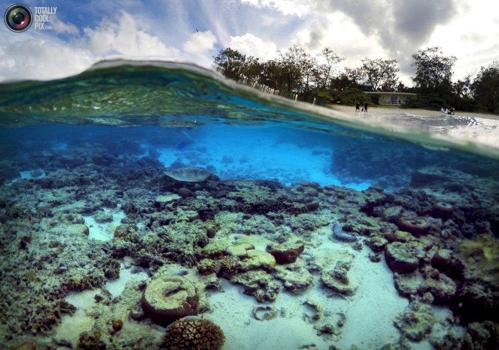 Туристы стоят перед хижинами, которые находятся на курорте острова, черепаха ищет пищу среди кораллов в лагуне острова.